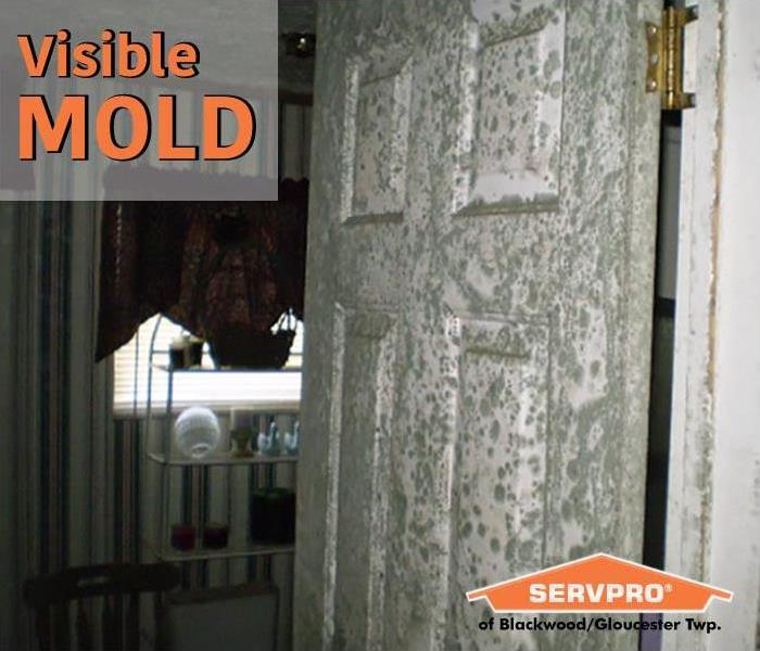 Mold Remediation Mold Testing: When to Have It Done