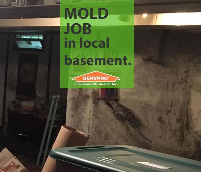 Mold Remediation How To Manage Mold