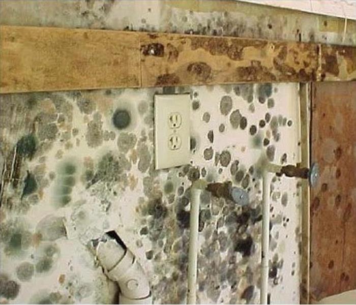 Mold Remediation Natural