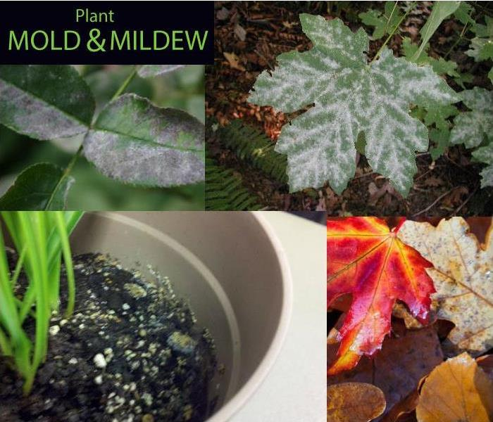 Mold Remediation Plant Mold and Mildew: What To Do.