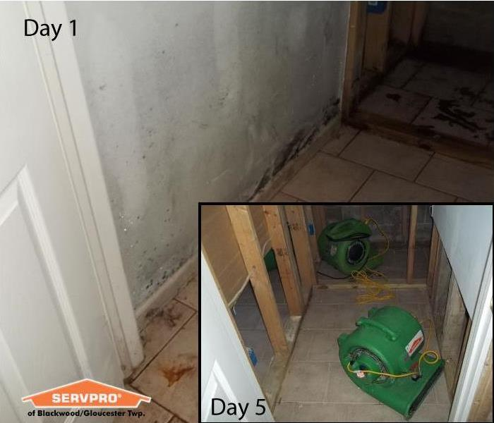 Mold Remediation Mold Remediation in Gloucester Twp., N.J.