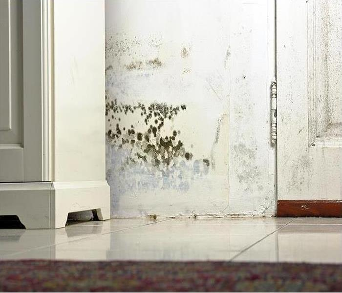 Mold Remediation Mold Tends To Favor Hard-To-Reach Places.