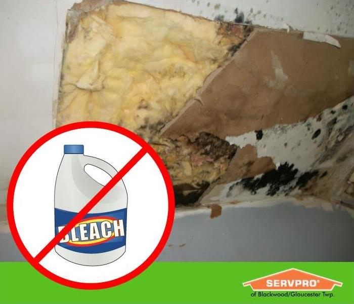 Mold Remediation Don't Use Bleach to Kill Mold!