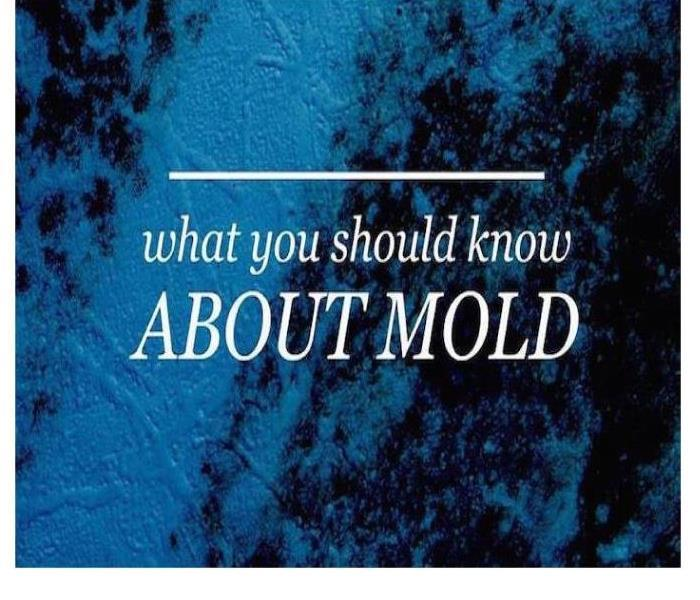 Mold Remediation The Truth About Mold